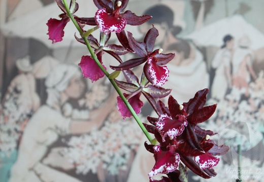 orchid_20091226